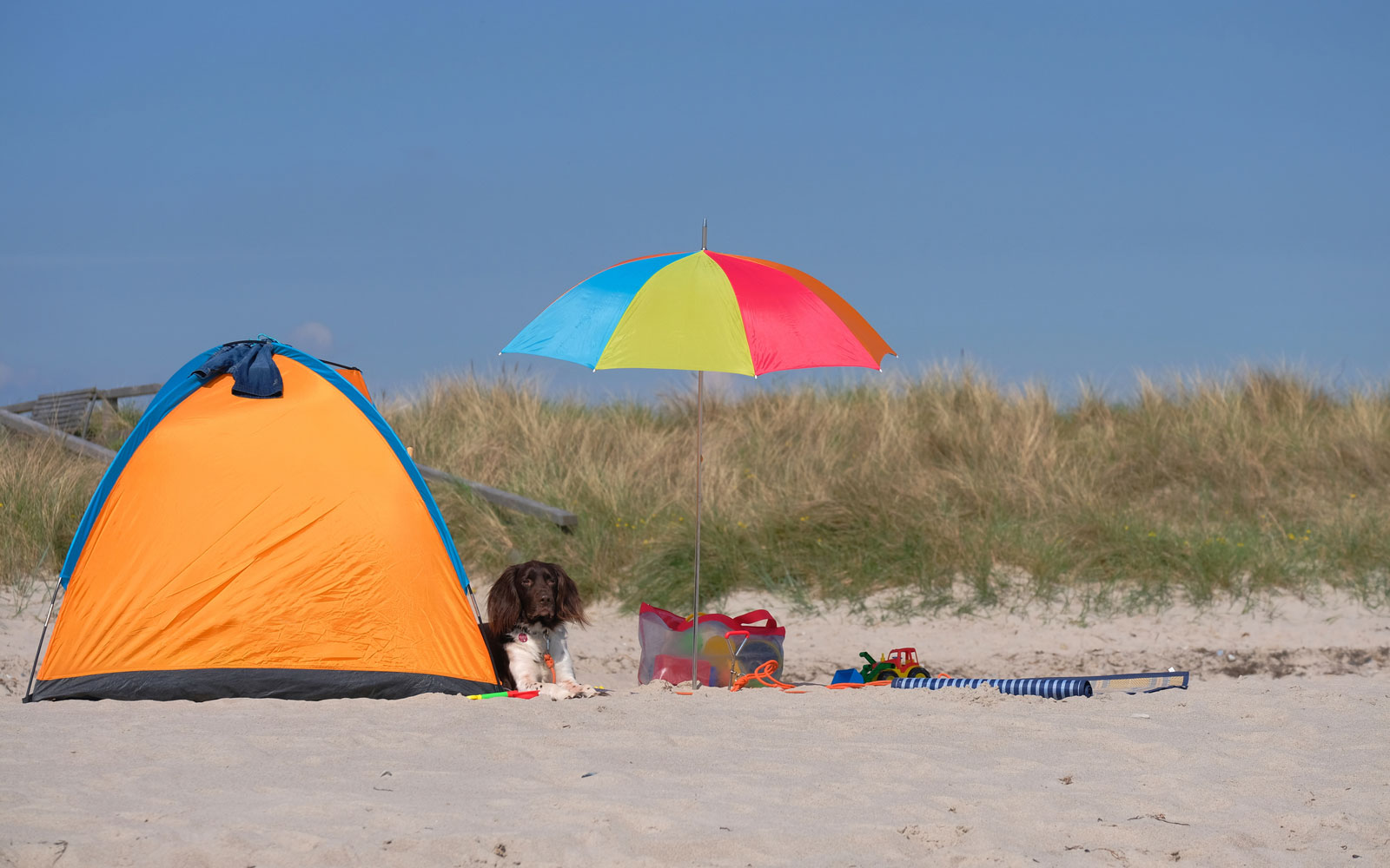 The Best Beach Canopies for Summer 2019