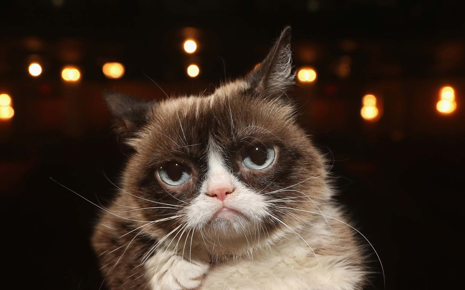 Grumpy Cat Dies at the Age of 7