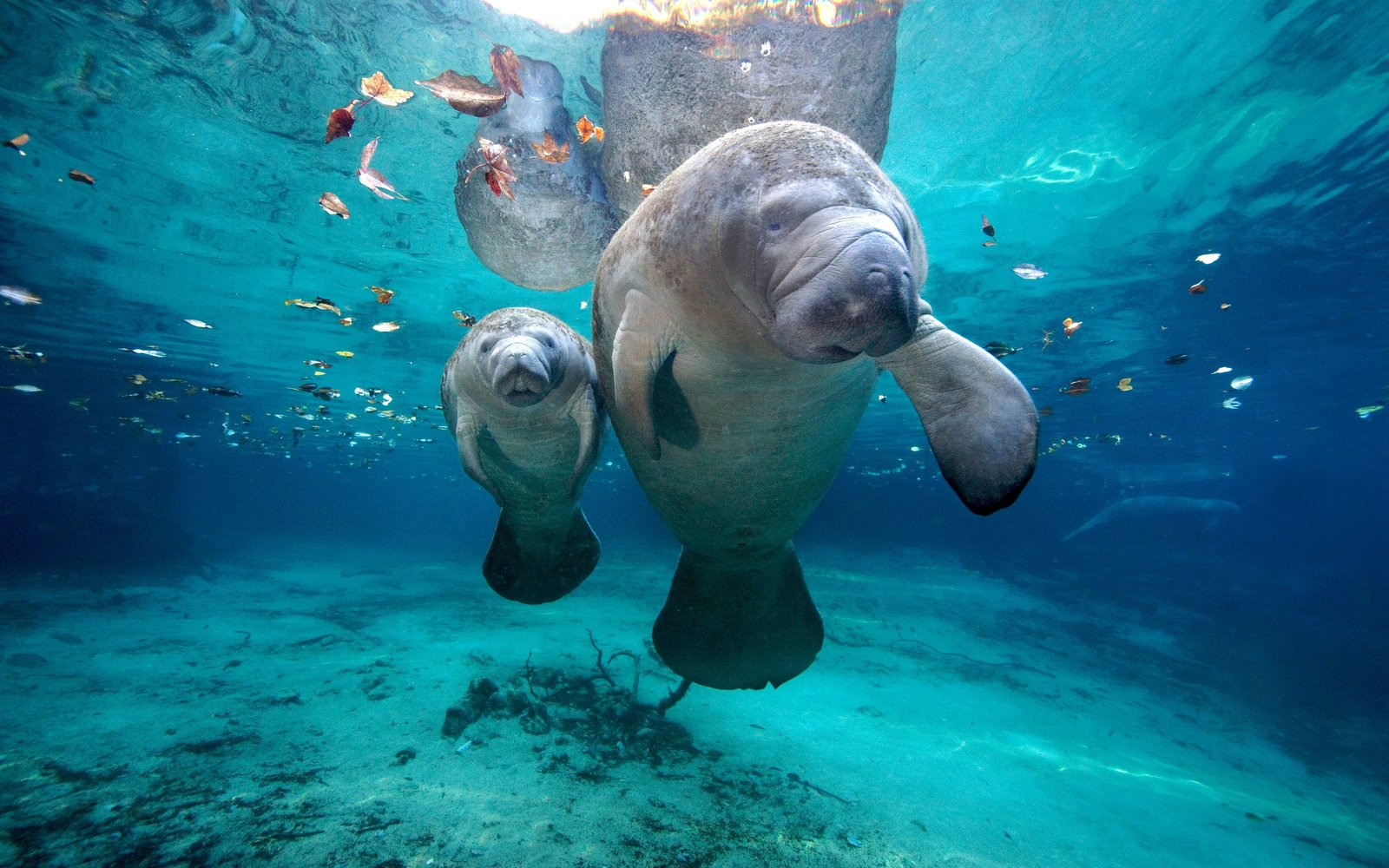 You Can Hang With (and Help Save!) Rescued Baby Manatees on Your Next Vacation