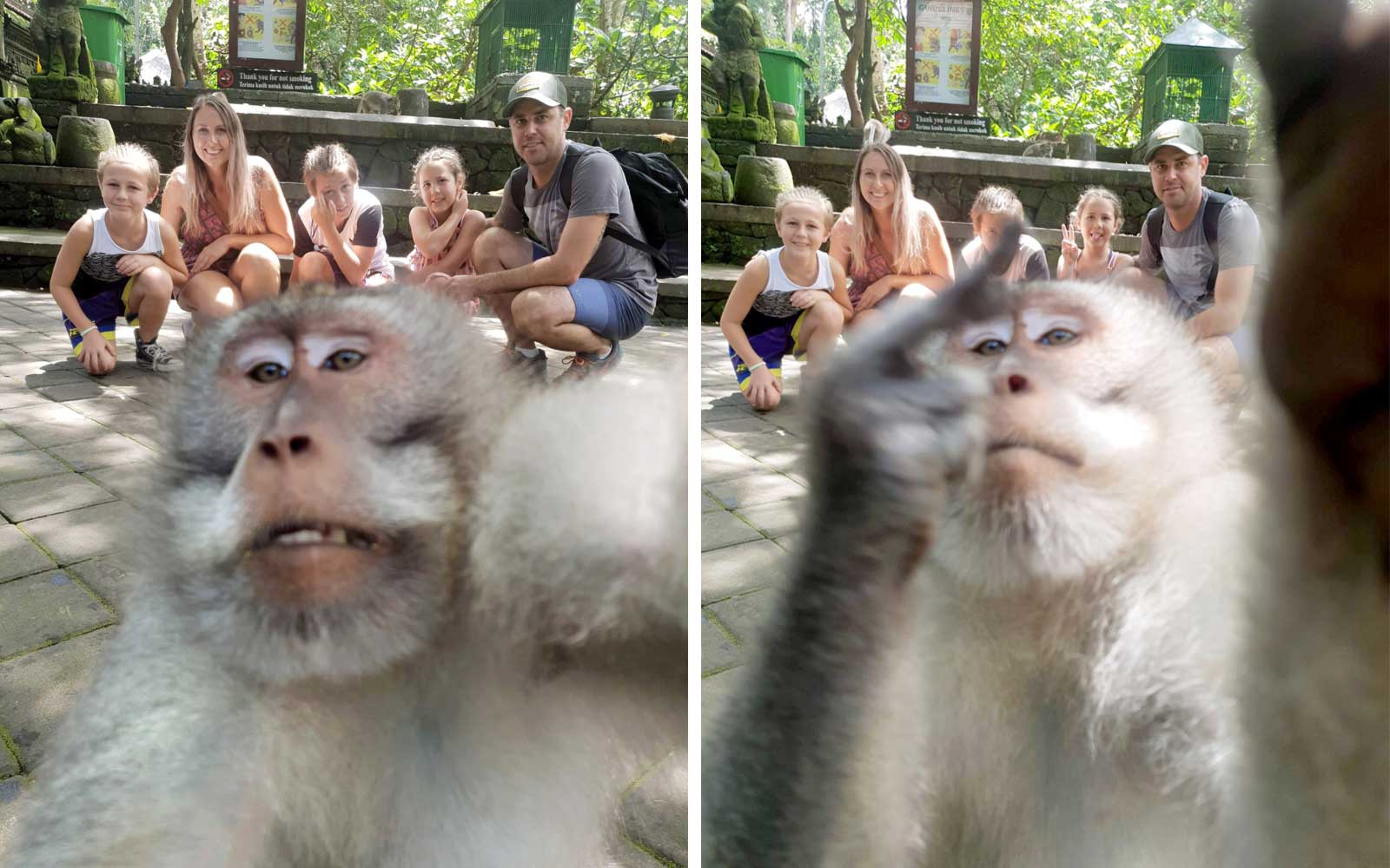 Balinese Monkey Flips Off Camera During Legendary Photobomb