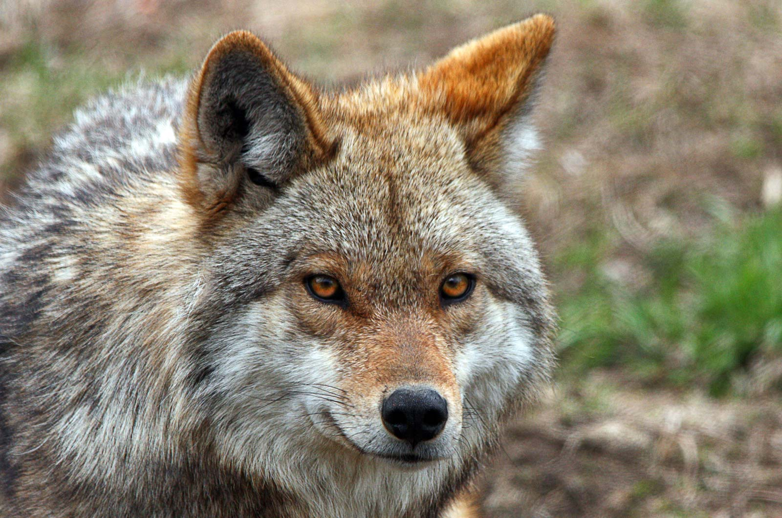 Mother and 4-year-old Son Hospitalized After Coyote Attack at a New Jersey Park