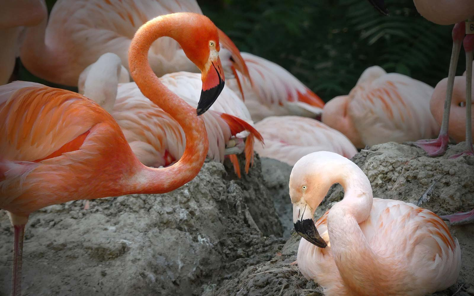Denver Zoo's Same-sex Flamingo Couple 'Lance Bass' and 'Freddie Mercury' Might Raise a Chick Together