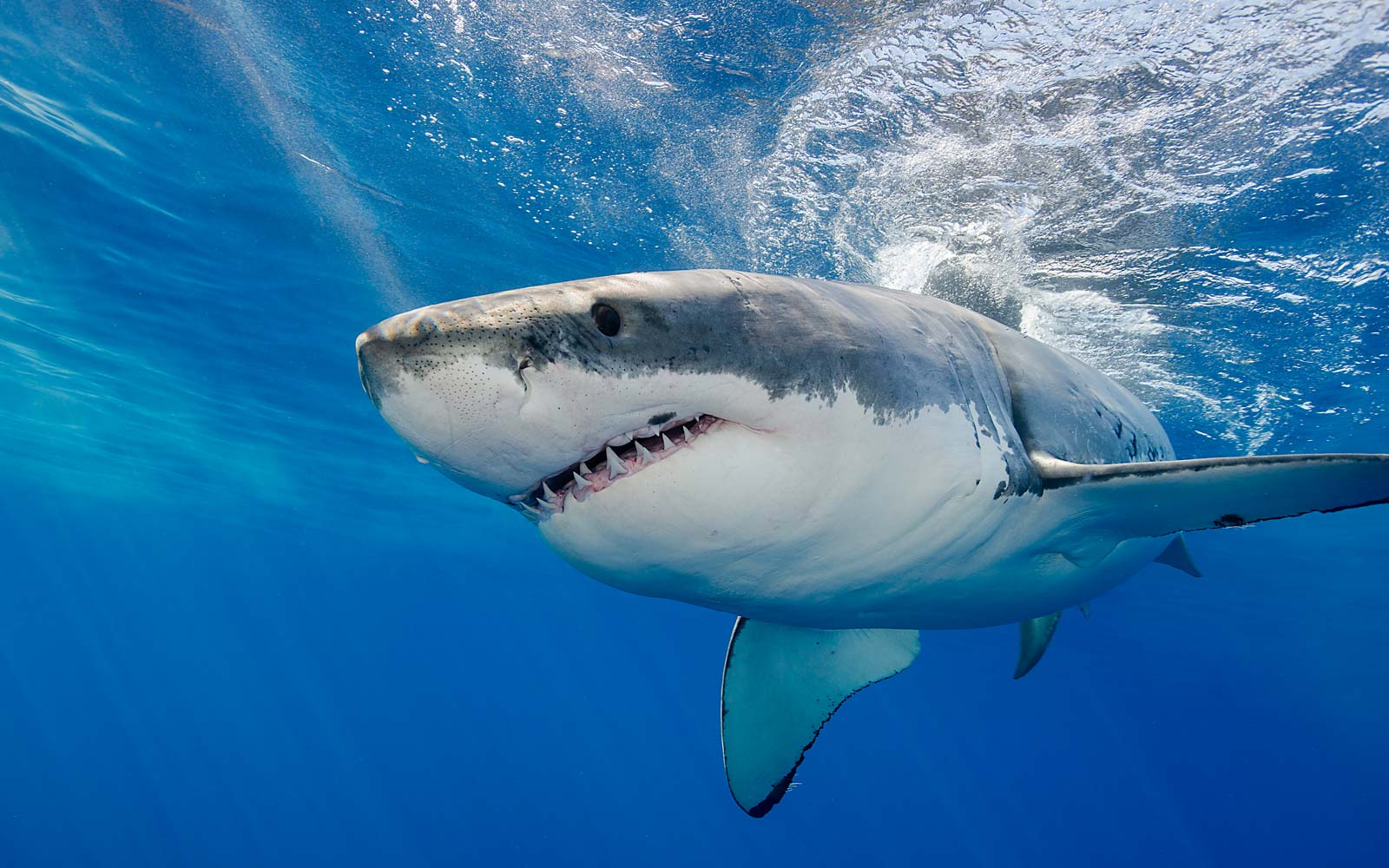 Watch the Moment a Great White Shark Stole a Bag of Fish Bait From New Jersey Fisherman