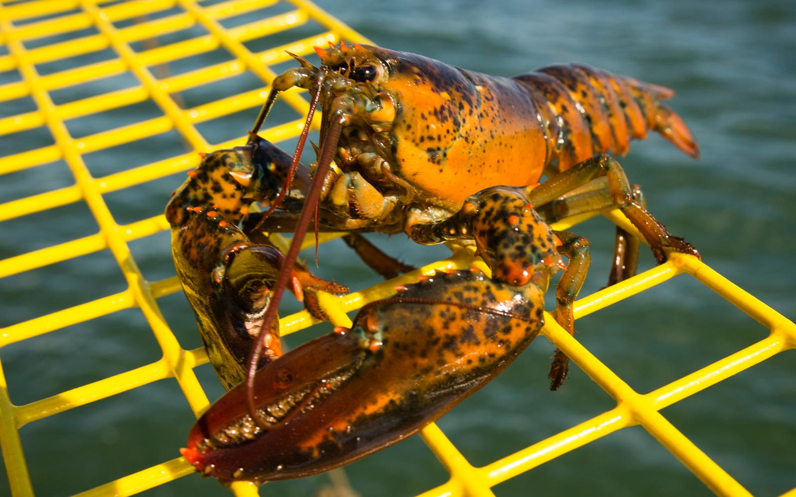 Maine's Lobster Collective Is Giving Away a Downeast Vacation This Summer