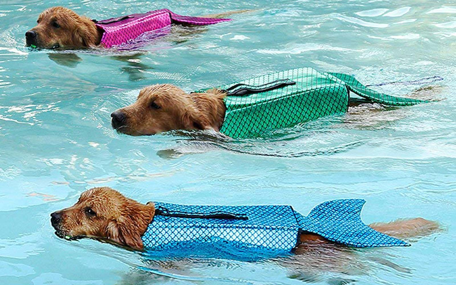 These Mermaid Life Jackets for Dogs Are so Cute, and You Can Get Them on Amazon