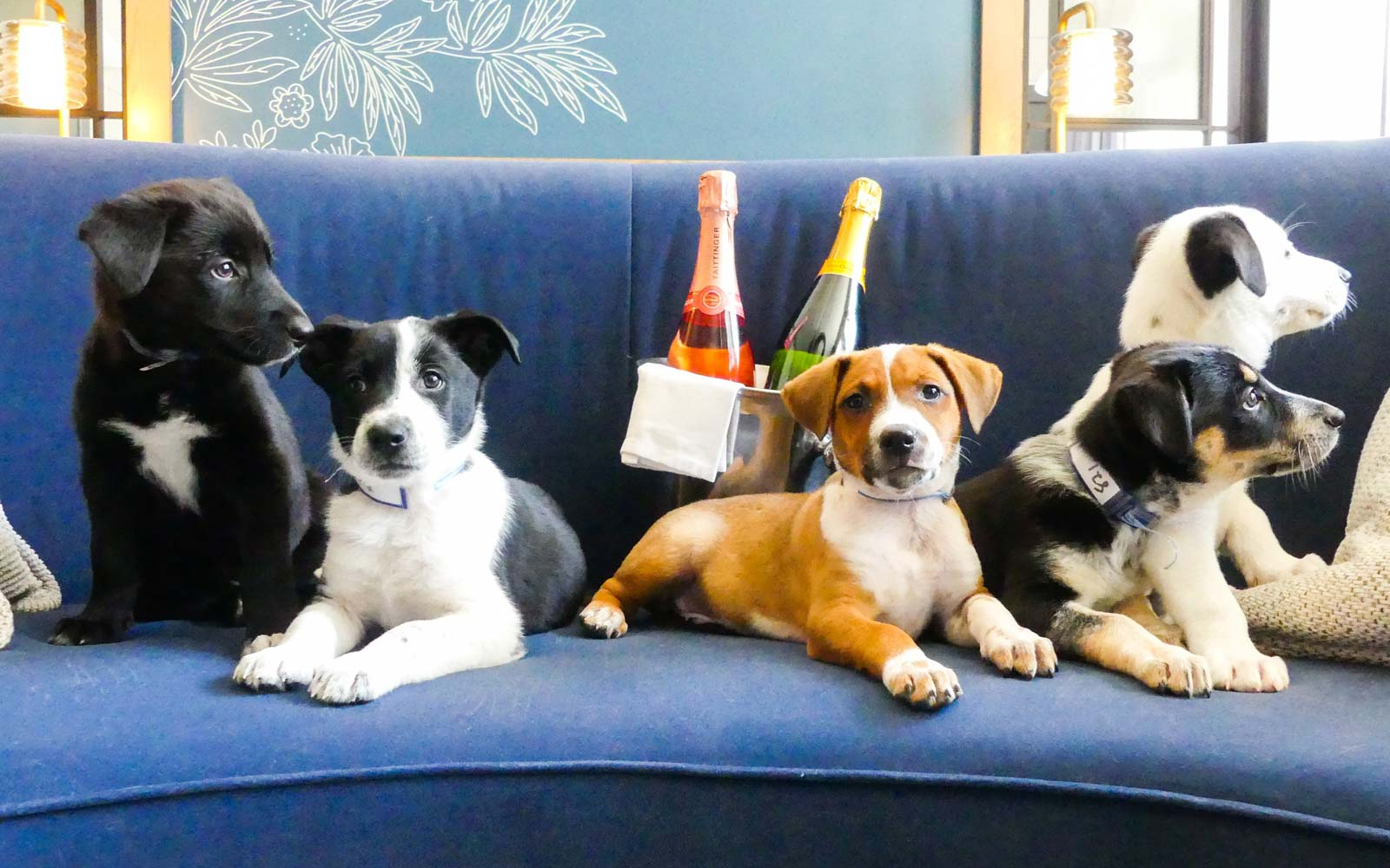 You Can Have Puppies and Prosecco Delivered to Your Room at This Denver Hotel
