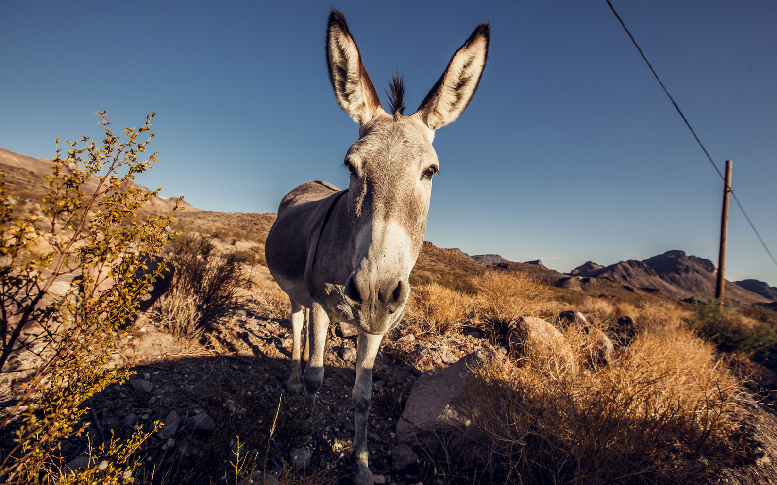 Over 40 Wild Burros Have Been Killed Since May — and California Officials Want Answers