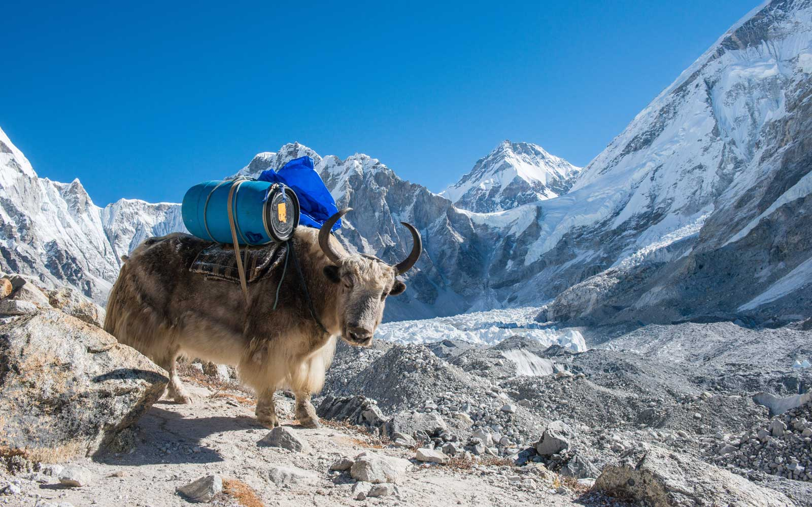 Nepal Bans Single-use Plastics on Mt. Everest After Removing 11 Tons of Trash