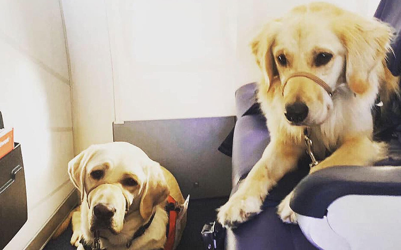 Meet the Very Good Therapy Dogs Who Flew to El Paso to Comfort Victims and First Responders