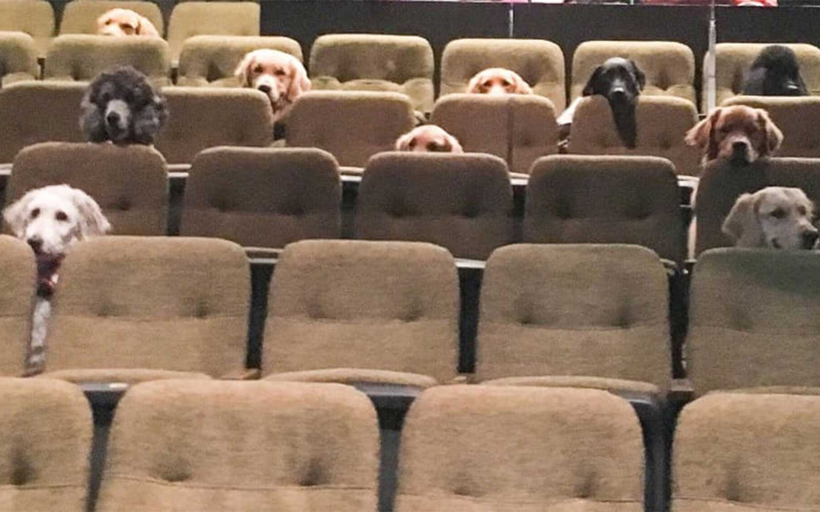 The Internet Is Freaking Out Over These Service Dogs Patiently Sitting Through a Performance of Billy Elliot