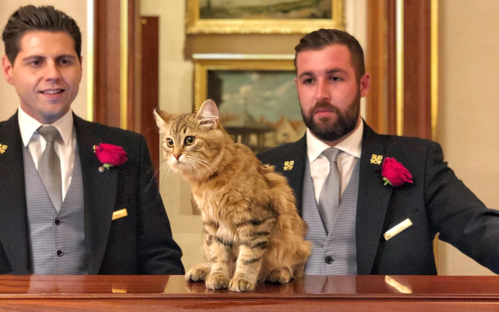 This hotel has an adorable resident kitten — and a cat committee to take care of her