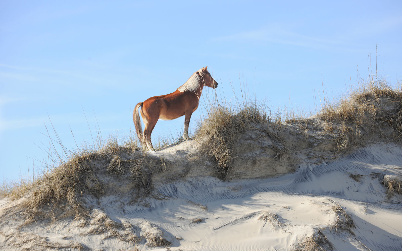 The Outer Banks' Wild Horses Have Safely Ridden Out Another Hurricane