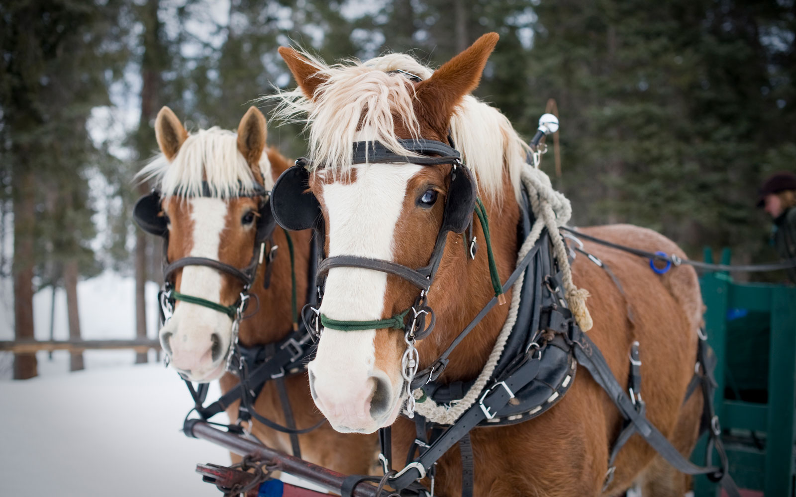 Two of the ranch's horses.