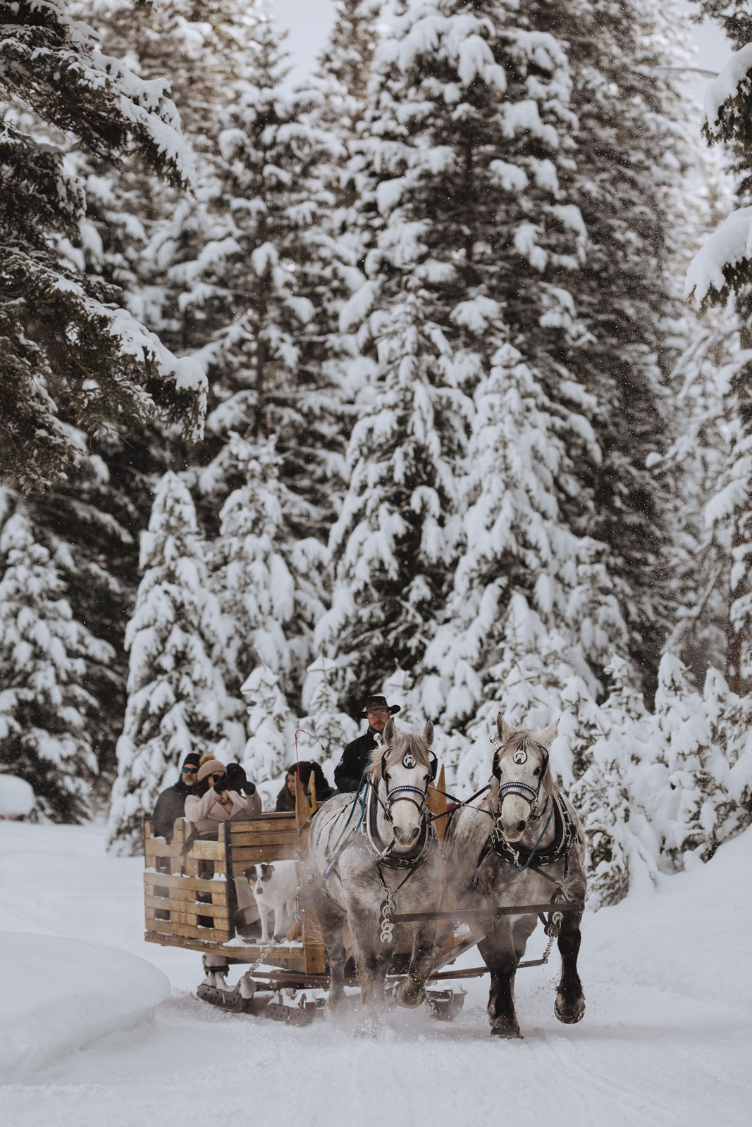 Dashing through the snow for a sleigh ride dinner, at the Lone Mountain Ranch.
