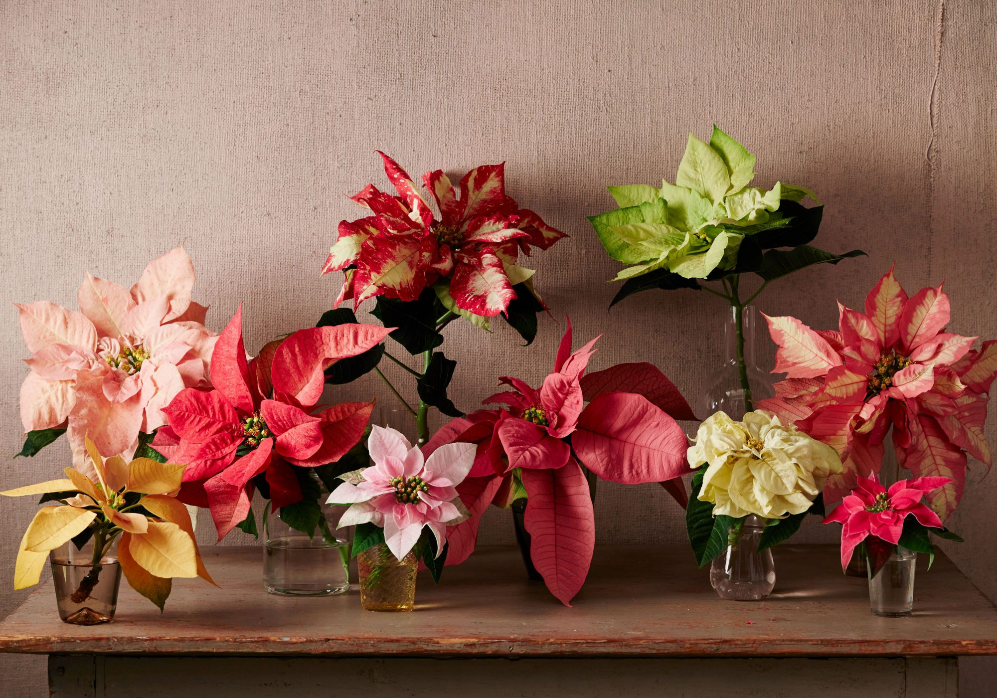 Colorful holiday plants