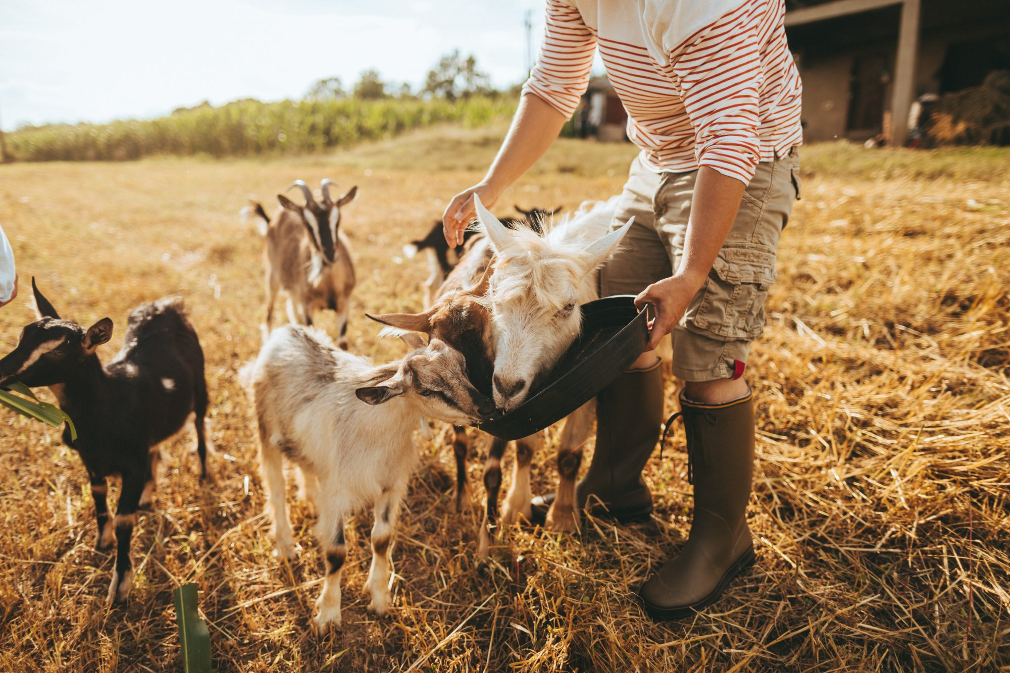 Backyard Livestock 101: A Guide to the Most Common Animals for Urban Farming