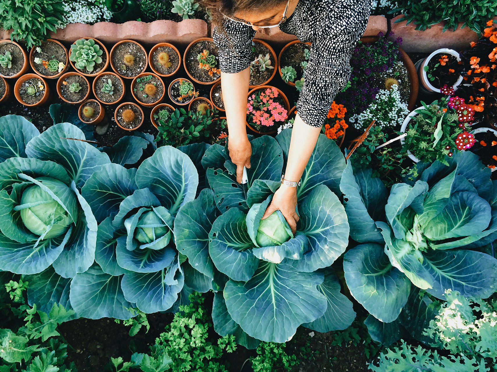 Why You Should Consider Transforming Part of Your Home Garden Into a Backyard Food Forest