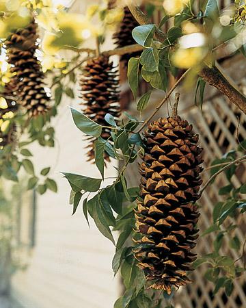 wma101773_spr06_pinecones.jpg