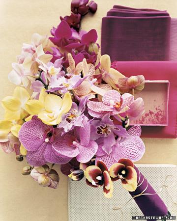 mwa103485_0108_purplebookie.jpg