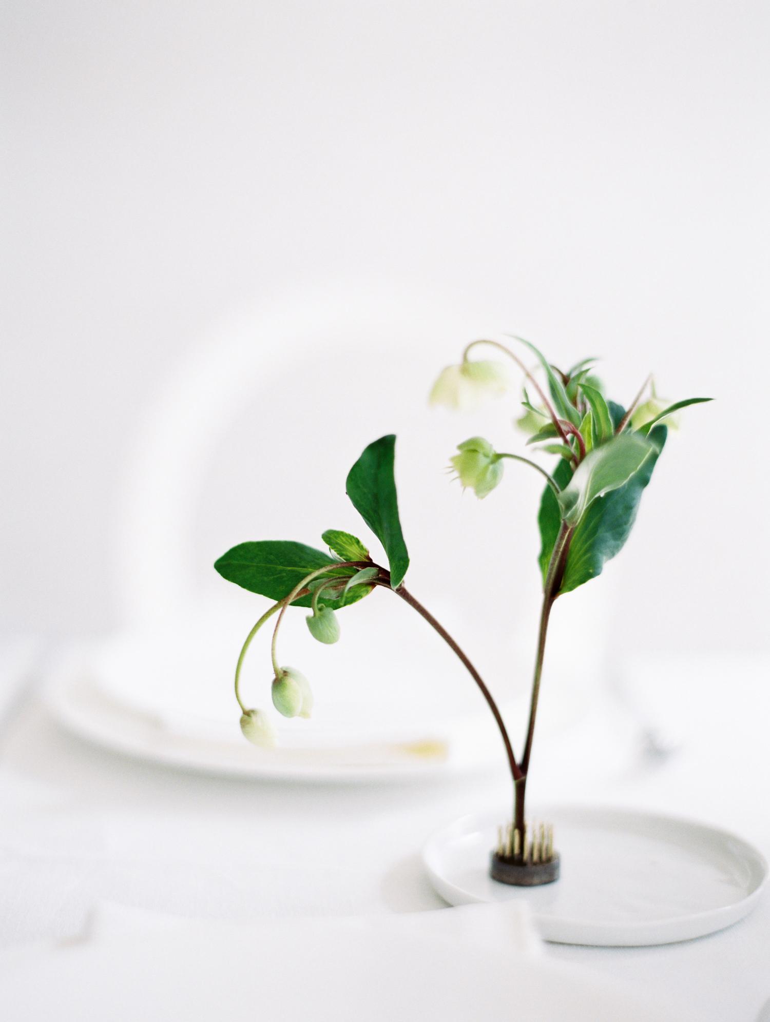 minimal sprig displayed using flower frog