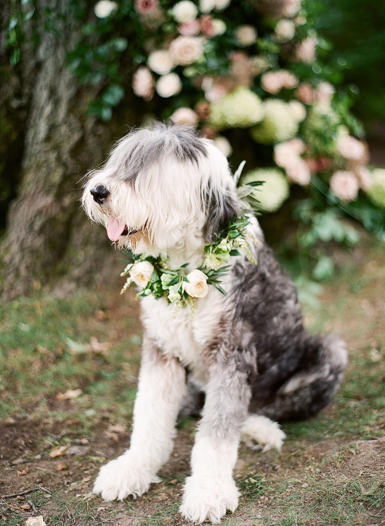dog wedding flower garland collar
