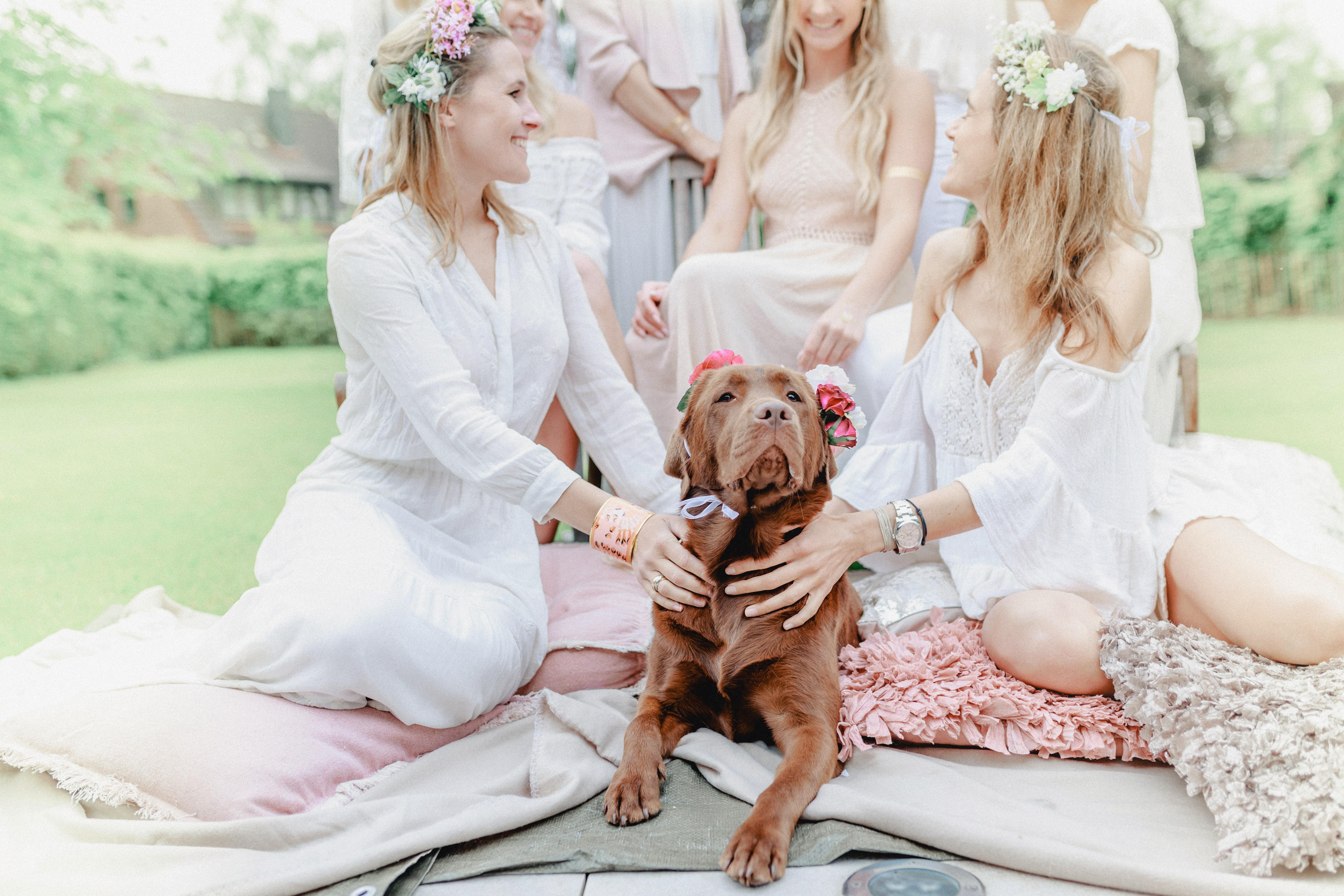 dog wedding bridesmaids chocolate labrador retriever flower drown
