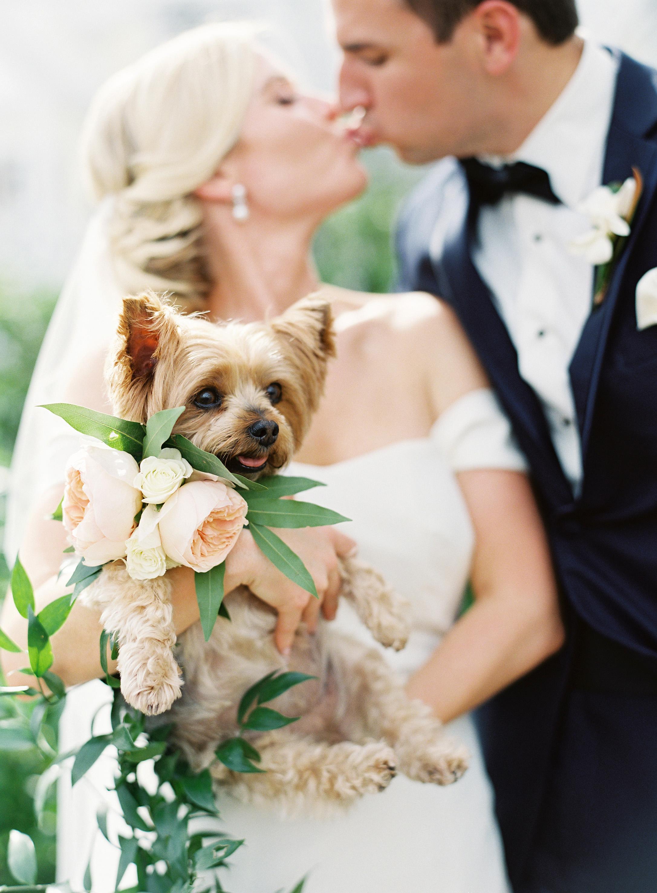 dog wedding bride groom kiss couple puppy bouquet