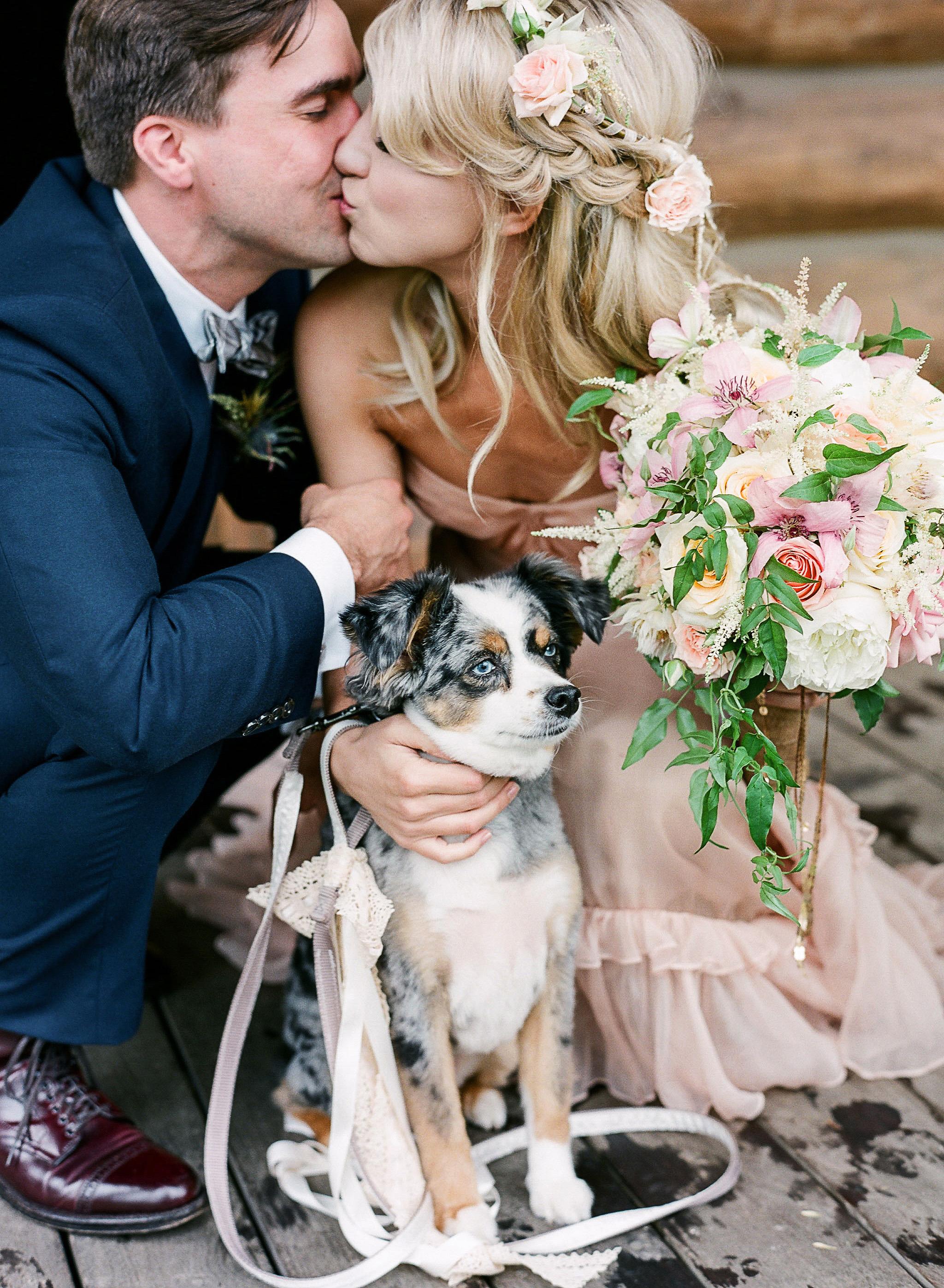 dog wedding bride groom kiss couple puppy australian shepard