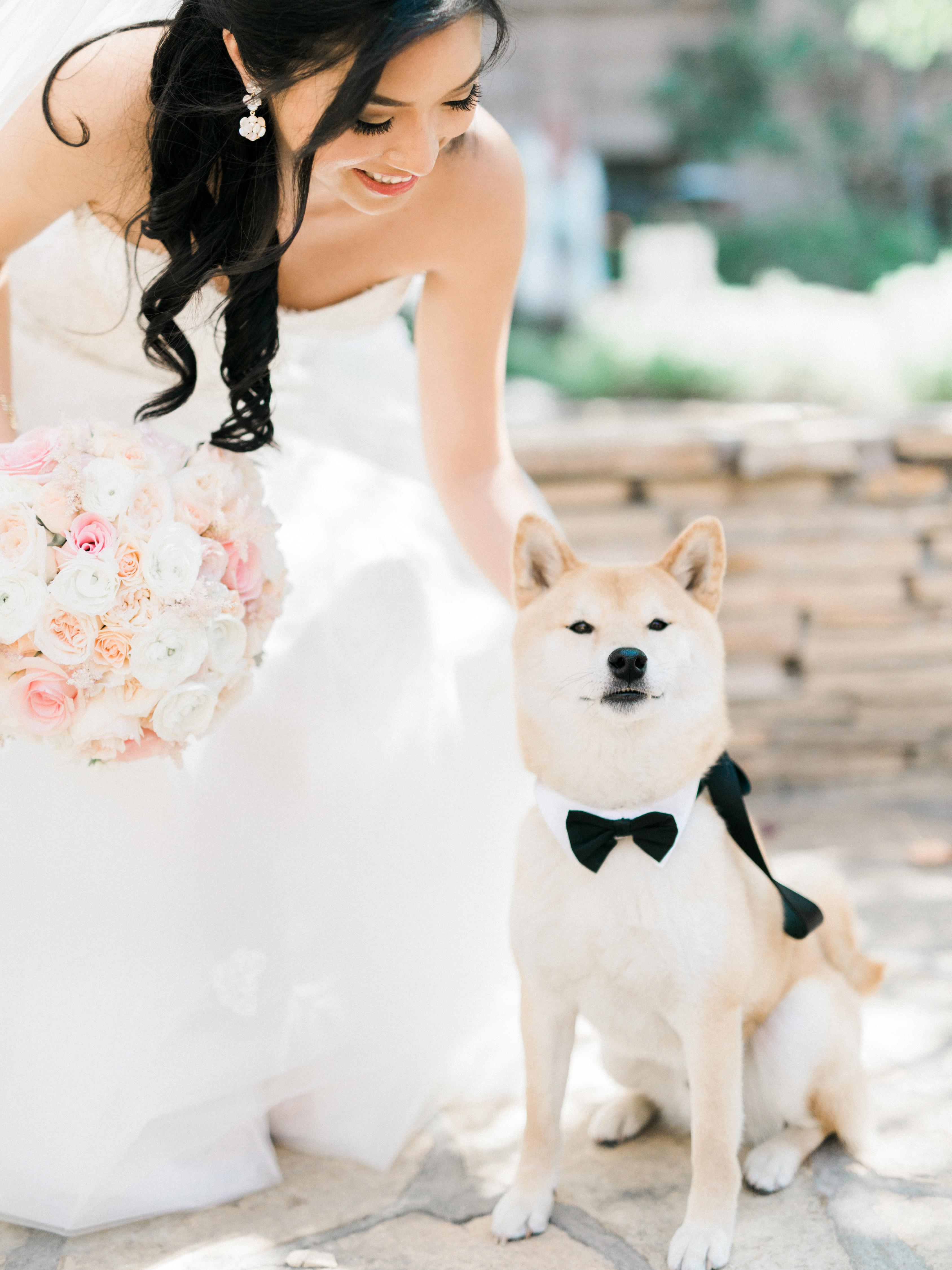 dog wedding bow tie bride