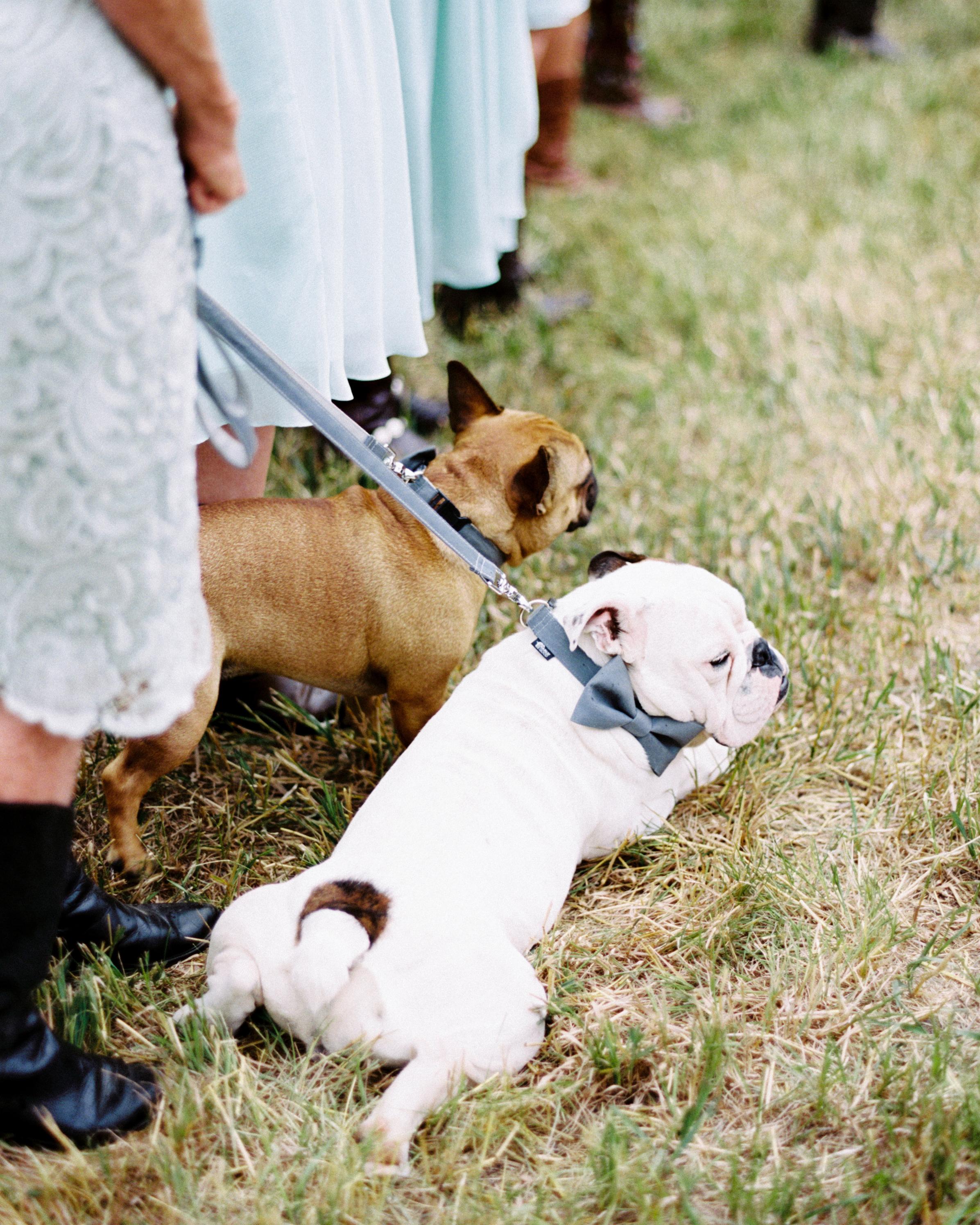 erin-jj-wedding-dogs-60-s111742-0115.jpg