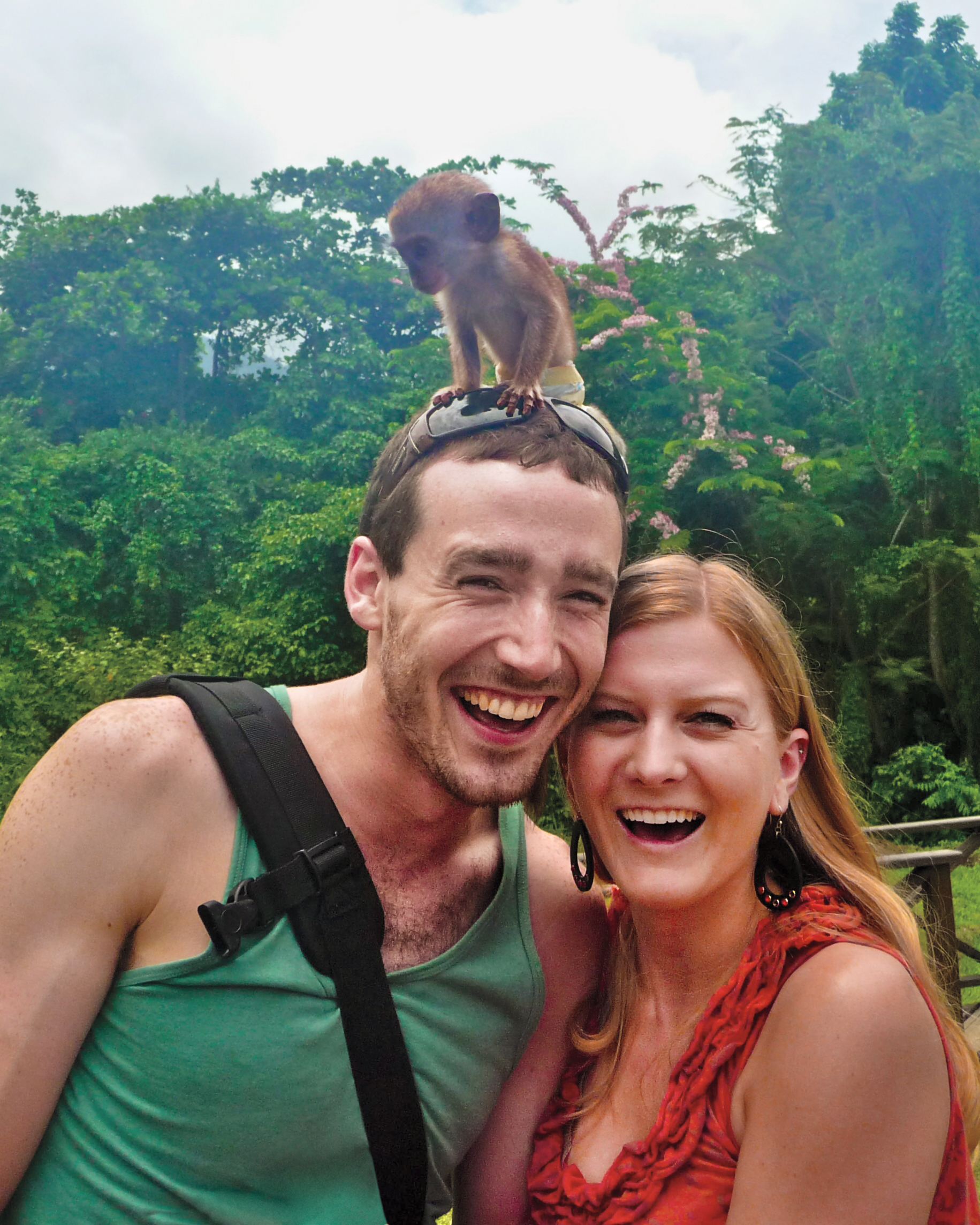 st-kitts-monkey-mws109559.jpg