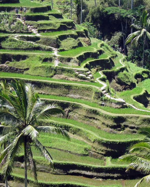 terraces-bali-honeymoon-diary.jpg
