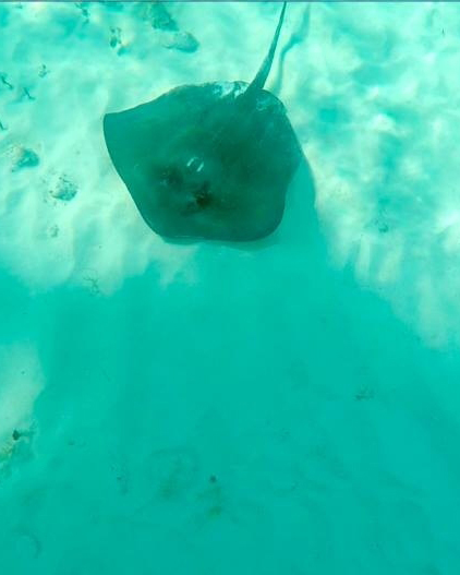 whitney-paul-caribbean-honeymoon-diary-seafloor-0215.jpg