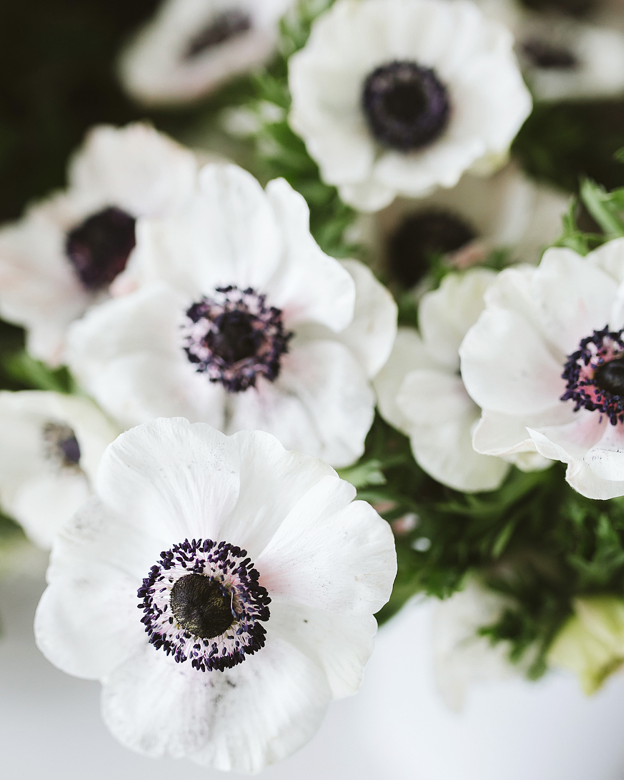 romantic-wedding-flowers-panda-anemone-0516.jpg