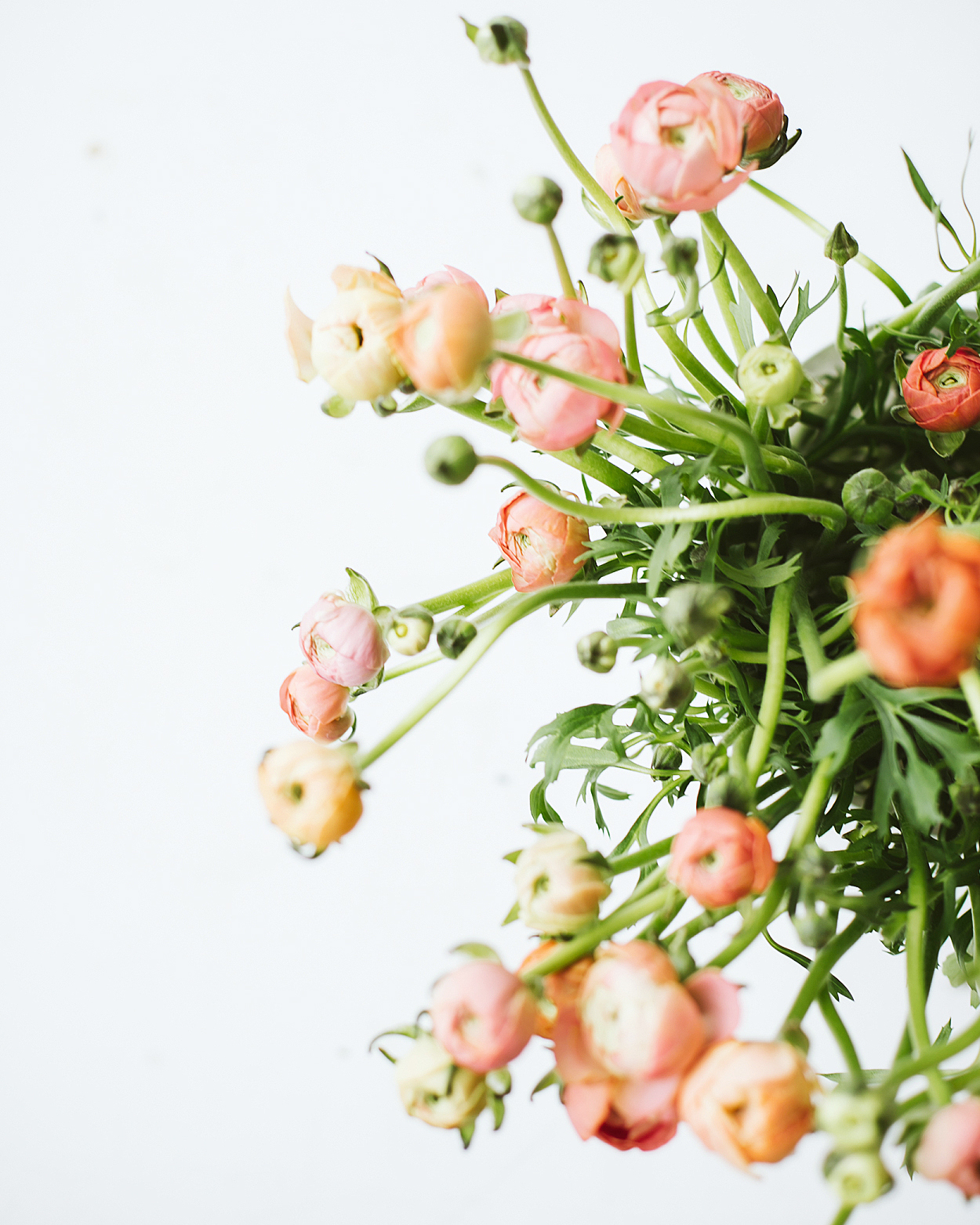 romantic-wedding-flowers-ranunculus-0516.jpg