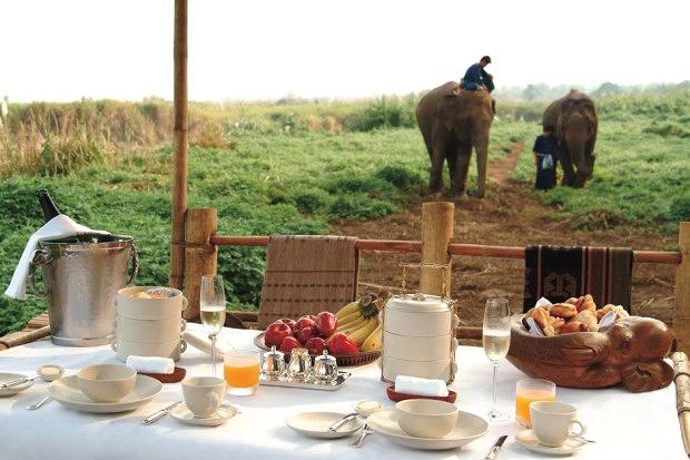 honeymoons camp elephants