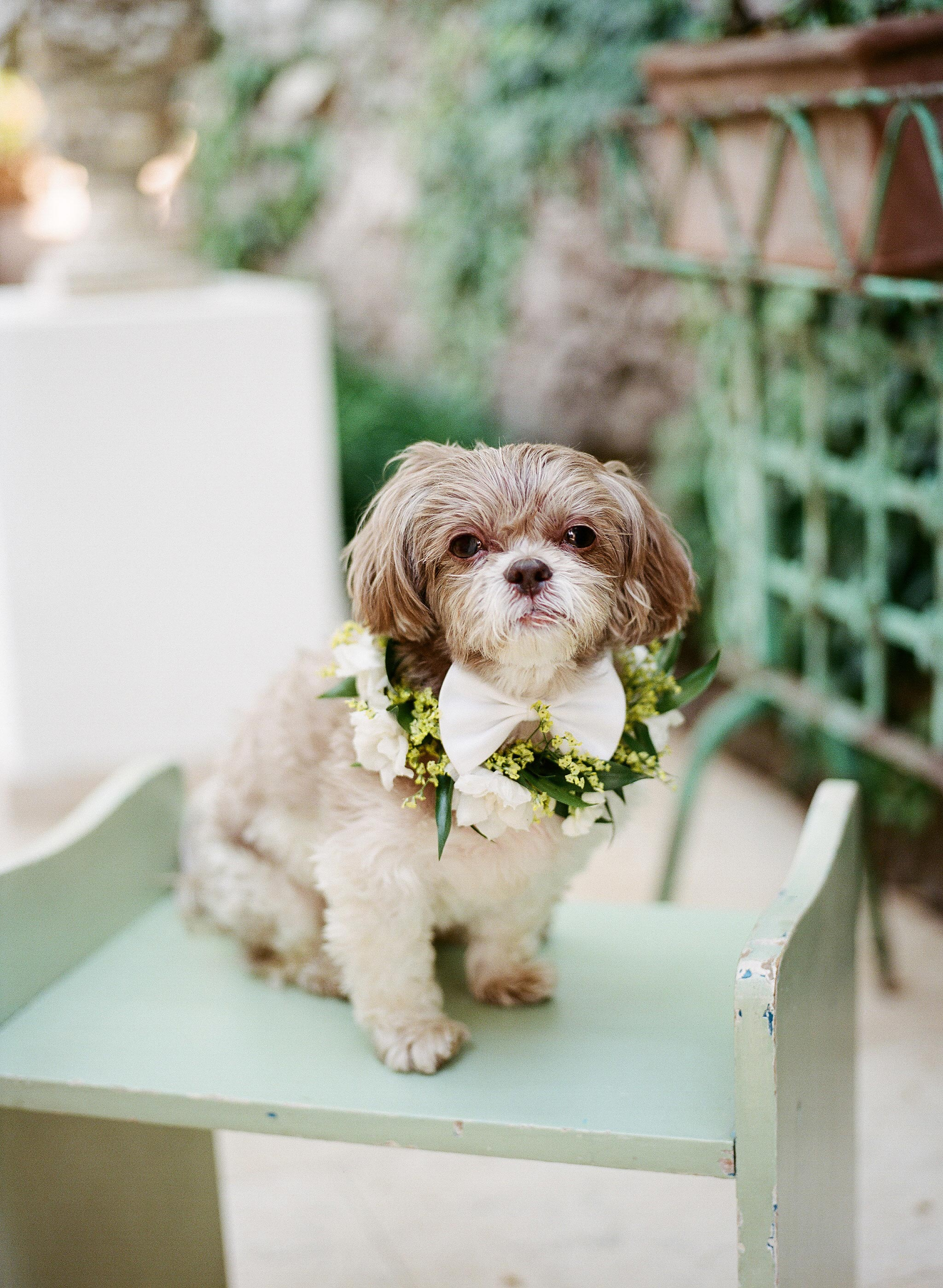 wedding dog flowers