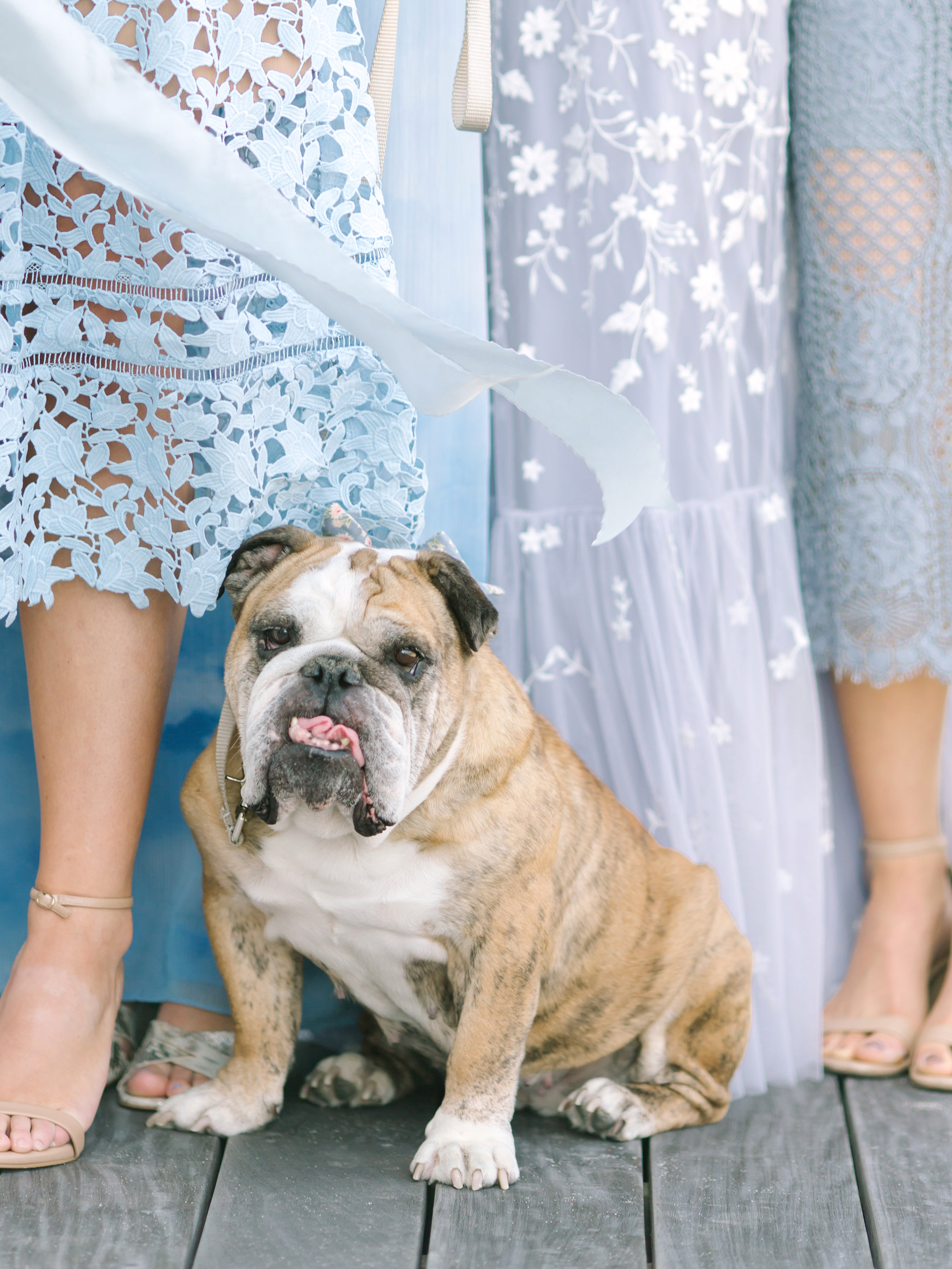 bride with dress dog