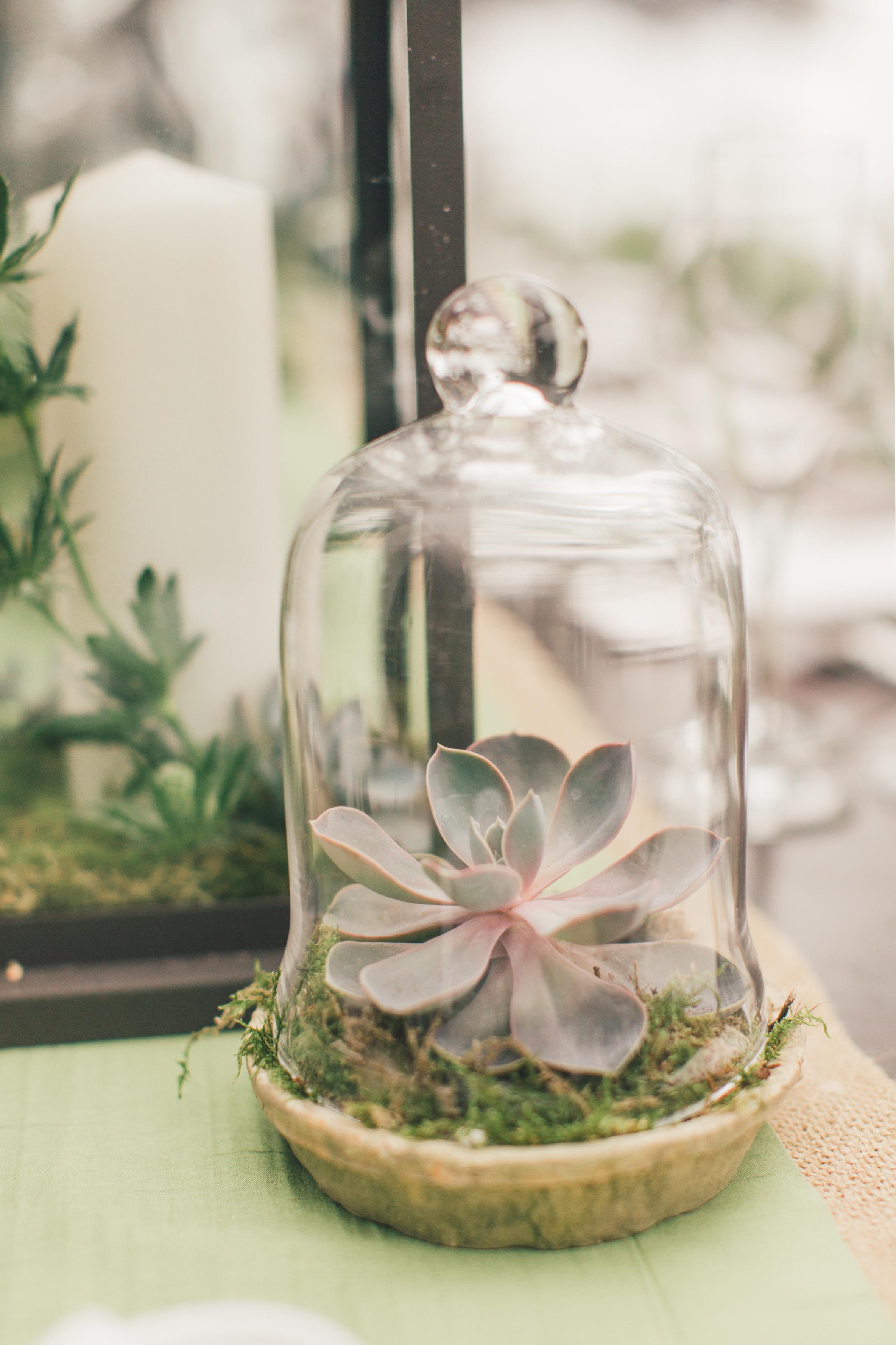 cloche succulent wedding centerpiece