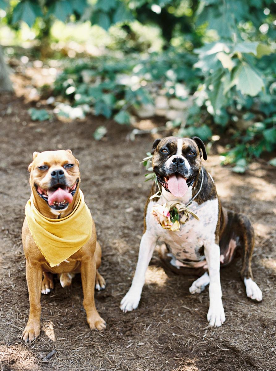 charla jesse wedding dogs