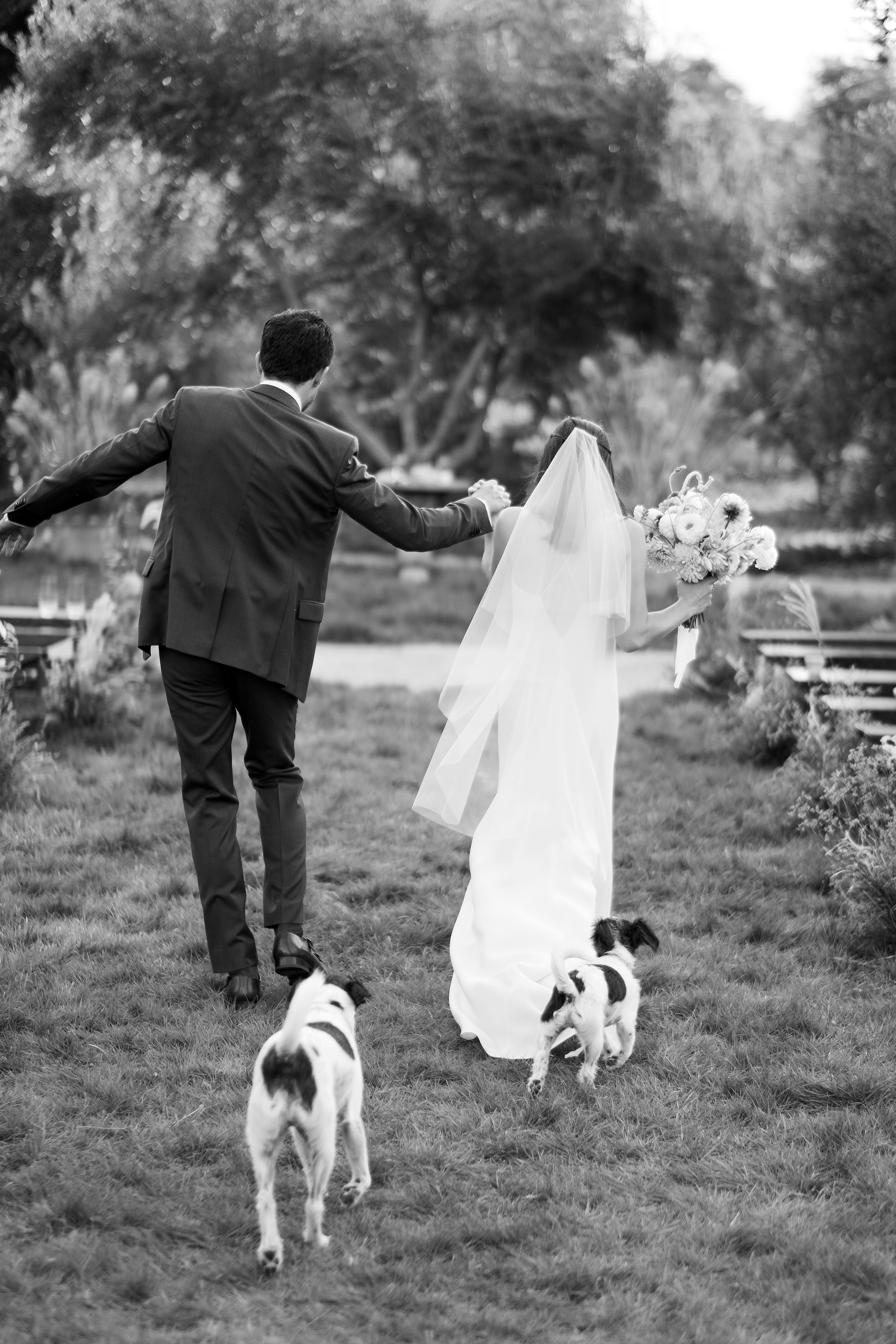 anika max wedding black and white couple with dogs