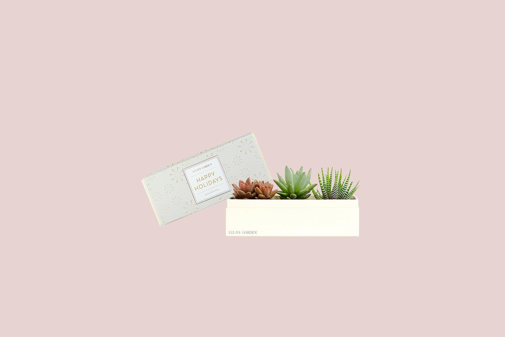 lulas garden succulent box