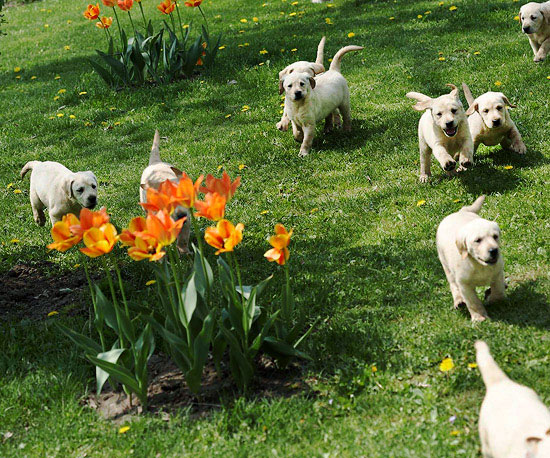 Spring Puppies