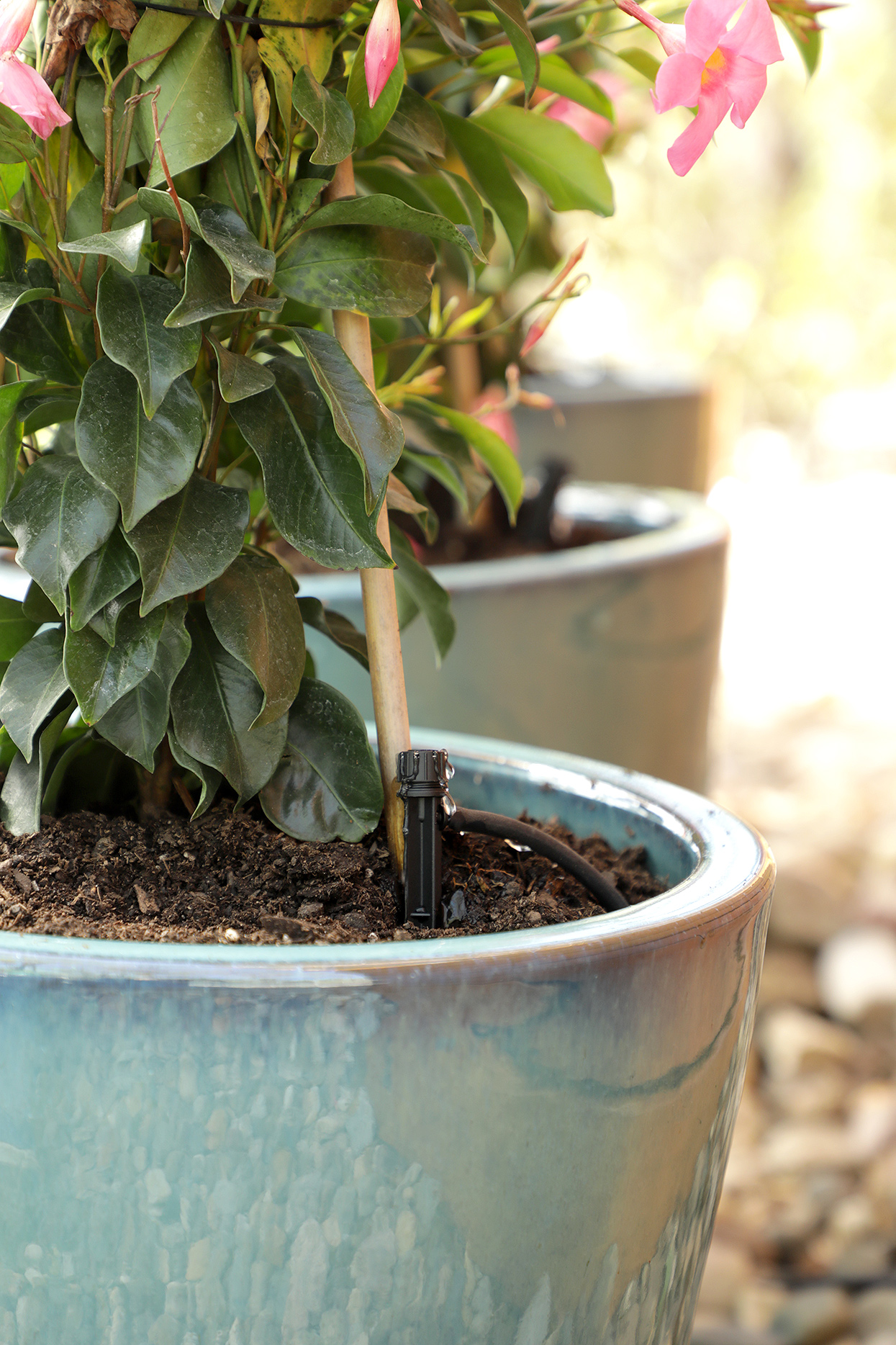 plant in container with irrigation