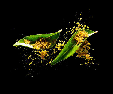 Curry powder/leaves
