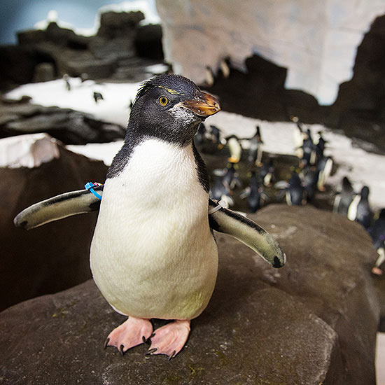 3. Meet the Penguins