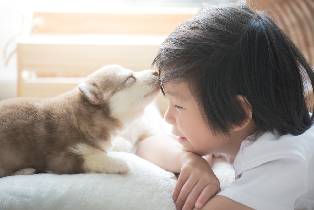 Puppies and Babies kiss