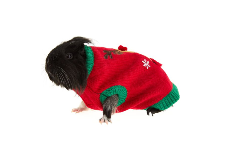 Pets Ugly Christmas Sweater 6