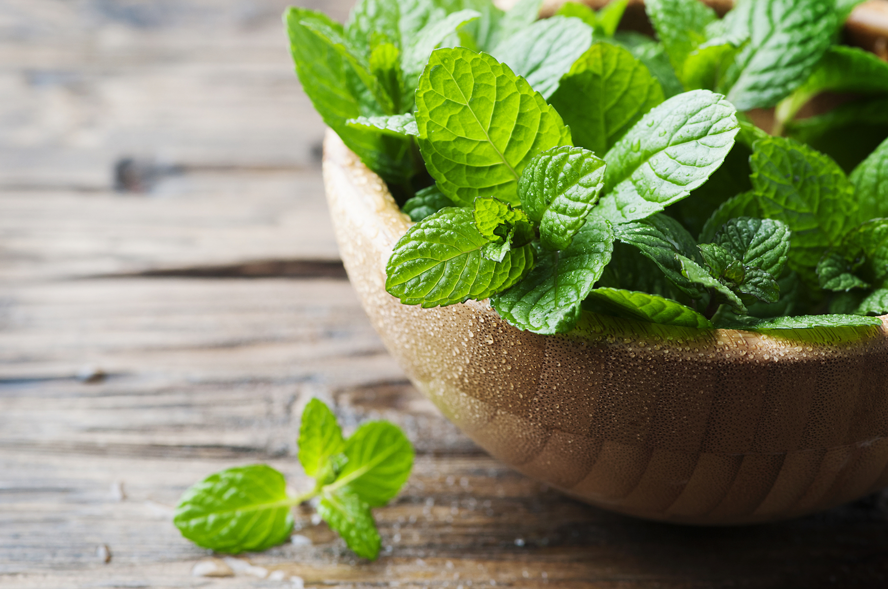 Mint Plant for Indoor Garden