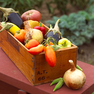 Harvest veggies regularly